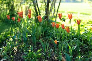 Bildno.: 11349306<br/><b>Feature: 11349267 - Swedish Spring</b><br/>A lush garden in Sweden<br />living4media / M&#246;ller, Cecilia