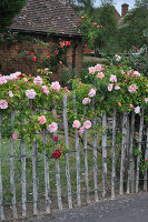 Bildno.: 11353820<br/><b>Feature: 11353802 - Divide and Conquer</b><br/>How to deal with gates and fences in your garden<br />living4media / Great Stock!