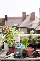 Bildno.: 11374540<br/><b>Feature: 11374522 - City Gardening</b><br/>All you need is a balcony and a few pots to grow your favourite foods<br />living4media / Eising Studio - Food Photo &amp; Video