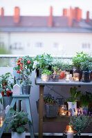Bildno.: 11374546<br/><b>Feature: 11374522 - City Gardening</b><br/>All you need is a balcony and a few pots to grow your favourite foods<br />living4media / Eising Studio - Food Photo &amp; Video
