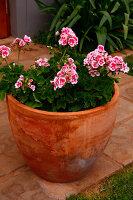 Bildno.: 11383150<br/><b>Feature: 11383132 - Indigenous Garden</b><br/>Low-maintenance country garden in Hartbeespoort<br />living4media / Great Stock!