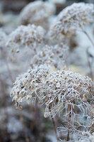 Bildnr.: 11400344<br/><b>Feature: 11400280 - Wohliges Winter-Wei&#223;</b><br/>Weihnachten bei Familie Hirsch in Schweden<br />living4media / M&#246;ller, Cecilia