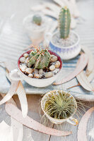 Bildno.: 11403098<br/><b>Feature: 11403088 - Prickly Partners</b><br/>Cactus and succulents make a lovely display<br />living4media / L&#246;scher, Sabine