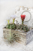 Bildno.: 11403100<br/><b>Feature: 11403088 - Prickly Partners</b><br/>Cactus and succulents make a lovely display<br />living4media / L&#246;scher, Sabine