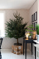 Bildno.: 11425682<br/><b>Feature: 11425675 - Forest Inspiration</b><br/>Christmas in Sweden with fresh green decoration from the forest<br />living4media / M&#246;ller, Cecilia