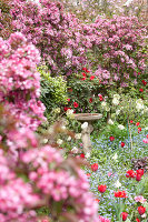 Bildno.: 11428728<br/><b>Feature: 11428706 - Tulip Time</b><br/>Spring garden in The Netherlands<br />living4media / Pietrek, Sibylle
