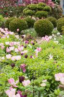 Bildno.: 11428730<br/><b>Feature: 11428706 - Tulip Time</b><br/>Spring garden in The Netherlands<br />living4media / Pietrek, Sibylle