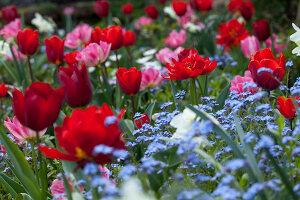 Bildno.: 11428748<br/><b>Feature: 11428706 - Tulip Time</b><br/>Spring garden in The Netherlands<br />living4media / Pietrek, Sibylle