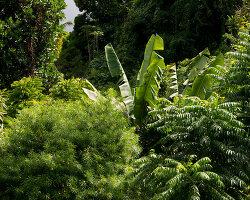 Bildnr.: 11432588<br/><b>Feature: 11432546 - Die Farben der Tropen</b><br/>Designerin Heather Maund bannt Farben und Stimmung der Seychellen auf Stoff<br />living4media / von Oswald, Yvonne
