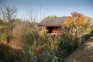 Bildno.: 11444466<br/><b>Feature: 11444463 - Green Love</b><br/>Making the most of an allotment plot in Cologne, Germany<br />living4media / Pietrek, Sibylle