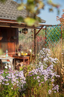 Bildno.: 11444478<br/><b>Feature: 11444463 - Green Love</b><br/>Making the most of an allotment plot in Cologne, Germany<br />living4media / Pietrek, Sibylle