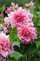 Bildno.: 11457458<br/><b>Feature: 11457439 - Sofiero Castle Garden</b><br/>Castle garden in Helsingborg, Sweden<br />living4media / Pietrek, Sibylle