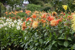 Bildno.: 11457460<br/><b>Feature: 11457439 - Sofiero Castle Garden</b><br/>Castle garden in Helsingborg, Sweden<br />living4media / Pietrek, Sibylle