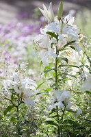 Bildno.: 11457480<br/><b>Feature: 11457439 - Sofiero Castle Garden</b><br/>Castle garden in Helsingborg, Sweden<br />living4media / Pietrek, Sibylle