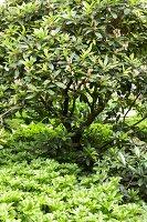 Bildnr.: 11501030<br/><b>Feature: 11501027 - Gr&#252;ne Oase in der Stadt</b><br/>Galeristin Elly liebt es in ihrem Garten zu lustwandeln und zu meditieren, Dresden<br />living4media / Krieg, Roland