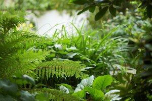 Bildnr.: 11501044<br/><b>Feature: 11501027 - Gr&#252;ne Oase in der Stadt</b><br/>Galeristin Elly liebt es in ihrem Garten zu lustwandeln und zu meditieren, Dresden<br />living4media / Krieg, Roland