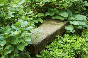 Bildnr.: 11501052<br/><b>Feature: 11501027 - Gr&#252;ne Oase in der Stadt</b><br/>Galeristin Elly liebt es in ihrem Garten zu lustwandeln und zu meditieren, Dresden<br />living4media / Krieg, Roland