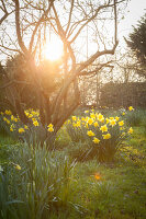 Bildno.: 12084104<br/><b>Feature: 12084103 - Shrubbery Deluxe</b><br/>Blooming garden in L&#246;hne, Germany<br />living4media / Pietrek, Sibylle