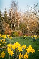 Bildno.: 12084106<br/><b>Feature: 12084103 - Shrubbery Deluxe</b><br/>Blooming garden in L&#246;hne, Germany<br />living4media / Pietrek, Sibylle