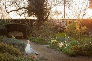 Bildno.: 12084108<br/><b>Feature: 12084103 - Shrubbery Deluxe</b><br/>Blooming garden in L&#246;hne, Germany<br />living4media / Pietrek, Sibylle