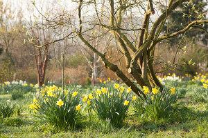 Bildno.: 12084116<br/><b>Feature: 12084103 - Shrubbery Deluxe</b><br/>Blooming garden in L&#246;hne, Germany<br />living4media / Pietrek, Sibylle