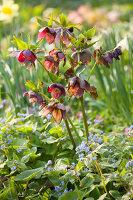 Bildno.: 12084124<br/><b>Feature: 12084103 - Shrubbery Deluxe</b><br/>Blooming garden in L&#246;hne, Germany<br />living4media / Pietrek, Sibylle