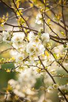 Bildno.: 12084126<br/><b>Feature: 12084103 - Shrubbery Deluxe</b><br/>Blooming garden in L&#246;hne, Germany<br />living4media / Pietrek, Sibylle