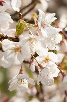 Bildno.: 12084128<br/><b>Feature: 12084103 - Shrubbery Deluxe</b><br/>Blooming garden in L&#246;hne, Germany<br />living4media / Pietrek, Sibylle