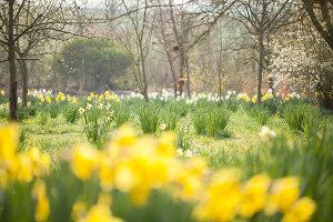 Bildno.: 12084130<br/><b>Feature: 12084103 - Shrubbery Deluxe</b><br/>Blooming garden in L&#246;hne, Germany<br />living4media / Pietrek, Sibylle