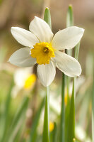 Bildno.: 12084132<br/><b>Feature: 12084103 - Shrubbery Deluxe</b><br/>Blooming garden in L&#246;hne, Germany<br />living4media / Pietrek, Sibylle