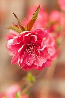 Bildno.: 12084134<br/><b>Feature: 12084103 - Shrubbery Deluxe</b><br/>Blooming garden in L&#246;hne, Germany<br />living4media / Pietrek, Sibylle