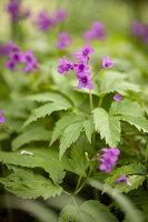 Bildno.: 12084136<br/><b>Feature: 12084103 - Shrubbery Deluxe</b><br/>Blooming garden in L&#246;hne, Germany<br />living4media / Pietrek, Sibylle