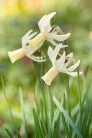 Bildno.: 12084138<br/><b>Feature: 12084103 - Shrubbery Deluxe</b><br/>Blooming garden in L&#246;hne, Germany<br />living4media / Pietrek, Sibylle