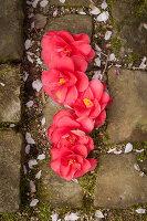 Bildno.: 12084148<br/><b>Feature: 12084103 - Shrubbery Deluxe</b><br/>Blooming garden in L&#246;hne, Germany<br />living4media / Pietrek, Sibylle