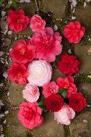 Bildno.: 12084150<br/><b>Feature: 12084103 - Shrubbery Deluxe</b><br/>Blooming garden in L&#246;hne, Germany<br />living4media / Pietrek, Sibylle
