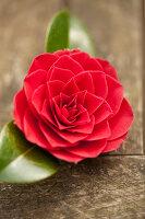 Bildno.: 12084152<br/><b>Feature: 12084103 - Shrubbery Deluxe</b><br/>Blooming garden in L&#246;hne, Germany<br />living4media / Pietrek, Sibylle