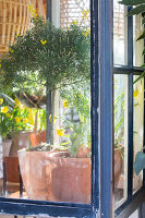 Immagine N°: 12100932<br/><b>Feature: 12100906 - A Place for Spring</b><br/>Covered area can provide a special place in the garden<br />living4media / Herwig, Modeste