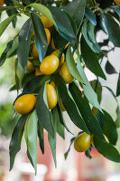 Bildno.: 12236430<br/><b>Feature: 12236411 - Under the Lemon Tree</b><br/>Gardening in a conservatory makes everything possible<br />living4media / Piru-Pictures