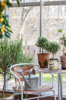 Bildno.: 12236432<br/><b>Feature: 12236411 - Under the Lemon Tree</b><br/>Gardening in a conservatory makes everything possible<br />living4media / Piru-Pictures