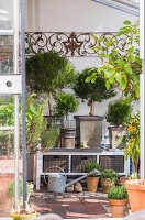 Bildno.: 12236434<br/><b>Feature: 12236411 - Under the Lemon Tree</b><br/>Gardening in a conservatory makes everything possible<br />living4media / Piru-Pictures