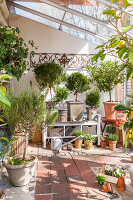 Bildno.: 12236436<br/><b>Feature: 12236411 - Under the Lemon Tree</b><br/>Gardening in a conservatory makes everything possible<br />living4media / Piru-Pictures
