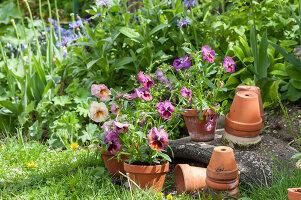 Bildno.: 12237160<br/><b>Feature: 12237139 - Bavarian Spring</b><br/>Allotment garden in Munich<br />living4media / Piru-Pictures