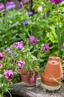 Bildno.: 12237162<br/><b>Feature: 12237139 - Bavarian Spring</b><br/>Allotment garden in Munich<br />living4media / Piru-Pictures