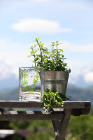 Bildno.: 12242568<br/><b>Feature: 12242556 - Decorative Herbs</b><br/>How to use herbs as a decorative accessory<br />living4media / Raider, Peter