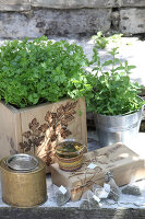 Bildno.: 12242572<br/><b>Feature: 12242556 - Decorative Herbs</b><br/>How to use herbs as a decorative accessory<br />living4media / Raider, Peter