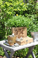 Bildno.: 12242574<br/><b>Feature: 12242556 - Decorative Herbs</b><br/>How to use herbs as a decorative accessory<br />living4media / Raider, Peter