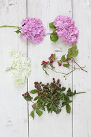 Bildno.: 12244638<br/><b>Feature: 12244598 - Hydrangea Hiatus</b><br/>Decorating with hydrangeas<br />living4media / Raider, Peter