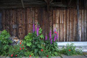 Bildno.: 12293456<br/><b>Feature: 12293430 - Pastoral Idyll</b><br/>Ancient farmhouse gets a makeover in the province of Bern, Switzerland<br />living4media / Giovanelli, Francesca