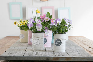 Bildno.: 12313240<br/><b>Feature: 12313229 - Tinned Pleasure</b><br/>Recycle food tins to create pastel coloured planters<br />living4media / Algermissen, Astrid