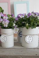 Bildno.: 12313248<br/><b>Feature: 12313229 - Tinned Pleasure</b><br/>Recycle food tins to create pastel coloured planters<br />living4media / Algermissen, Astrid
